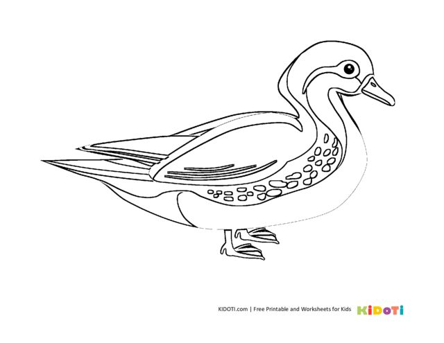 Mandarin duck coloring pages
